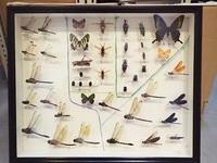 標本づくり相談室昆虫編-2.jpgのサムネール画像
