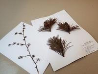 標本づくり相談室植物編-2.jpg
